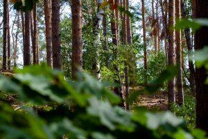 Schwerpunktthema – Nachhaltigkeit
